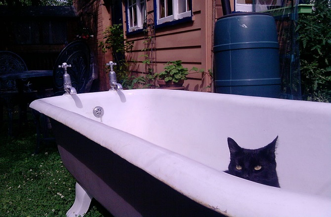 my_cat_in_a_bath_outside__by_tobyhs